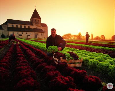 Reichenau-Gemüse    täglich frisch!
