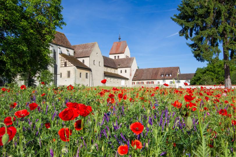 Ansicht auf das alte Kloster mit blühendem Mohnfeld im Vordergrund