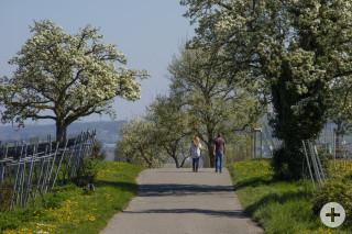Spaziergänger im Frühling